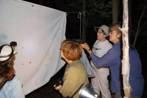 Attracting moths with light. Photo: Emily Damstra.