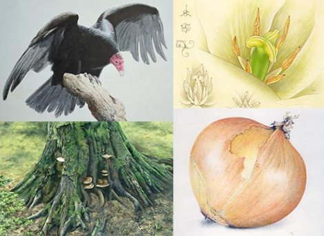 Clockwise from top left, these illustrations are © Barry K. MacKay, Kathryn Chorney, Karen Logan, and Meaghan Lynch